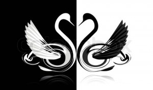 2869740-226765-black-and-white-swans-in-love